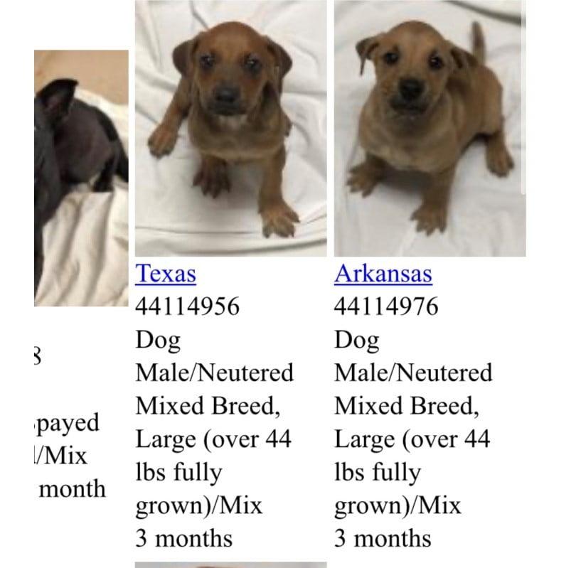 puppy listing on miami humane society